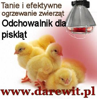 lampa do ogrzewania przepiórek