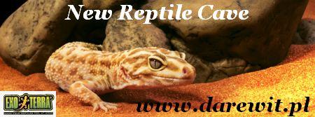 Exo-Terra New Reptile Cave darewit