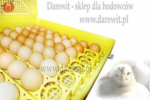 jajka w inkubatorze - darewit
