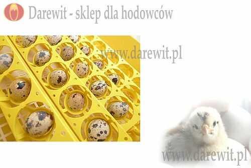 inkubacja przepiórki - darewit