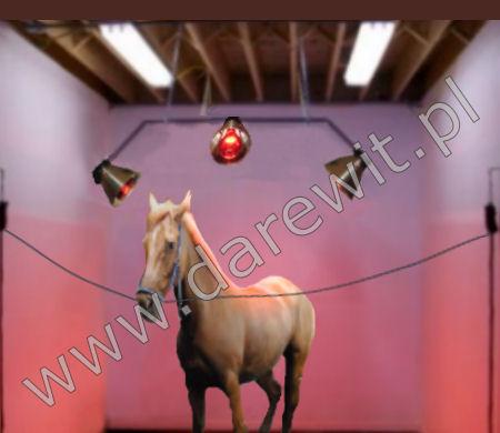 rehabilitacja koni podczerwienią - darewit